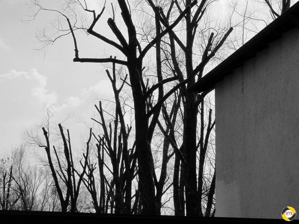 Baumschnitt © Hannelore Kiefer