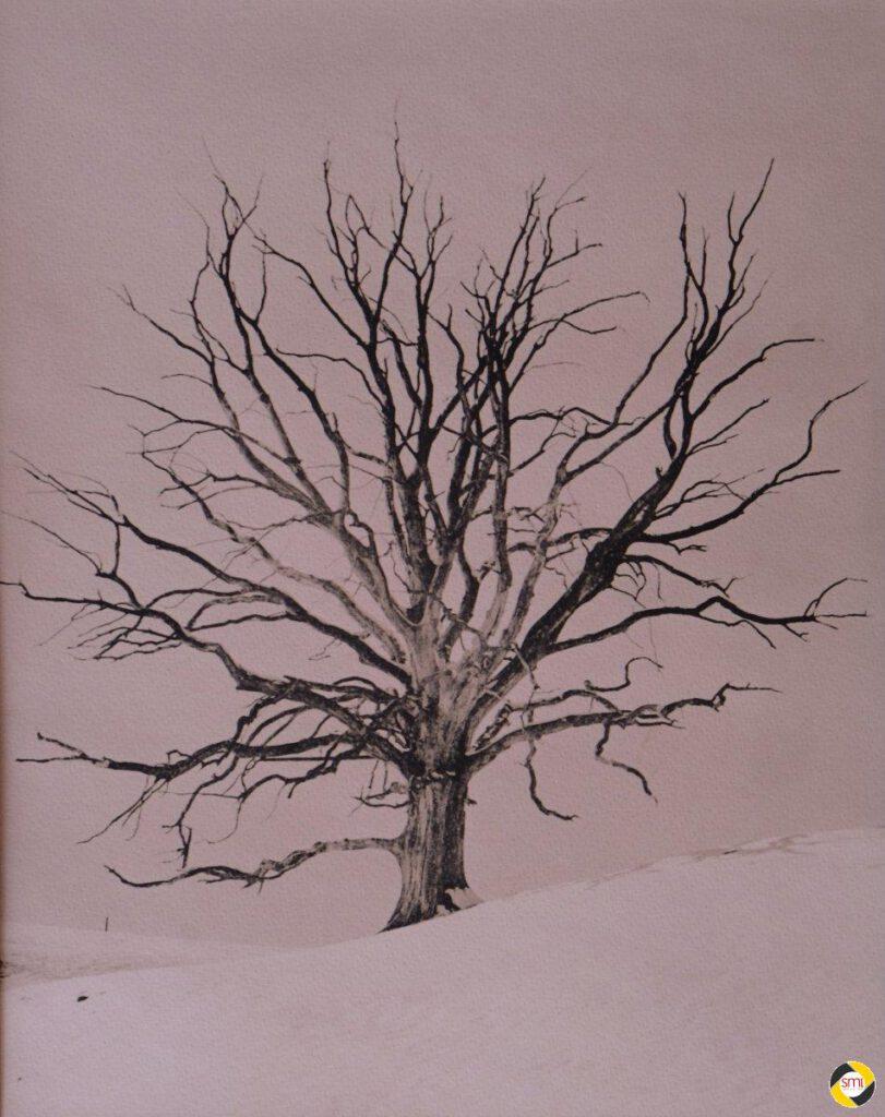 Baum (Lithprint) © Reno Terb