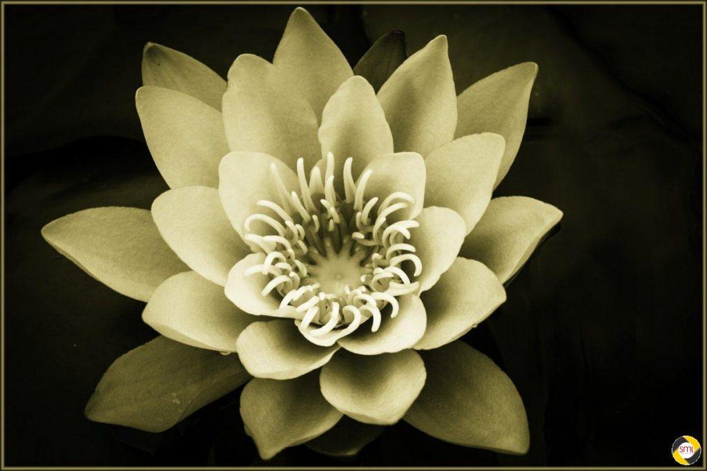 Blüte © Johann Binder