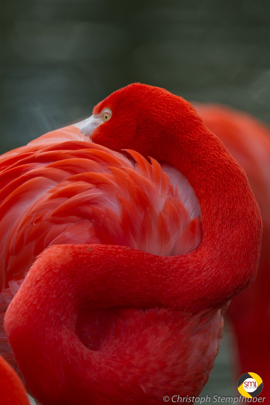 Flamingo © Christoph Stempfhuber