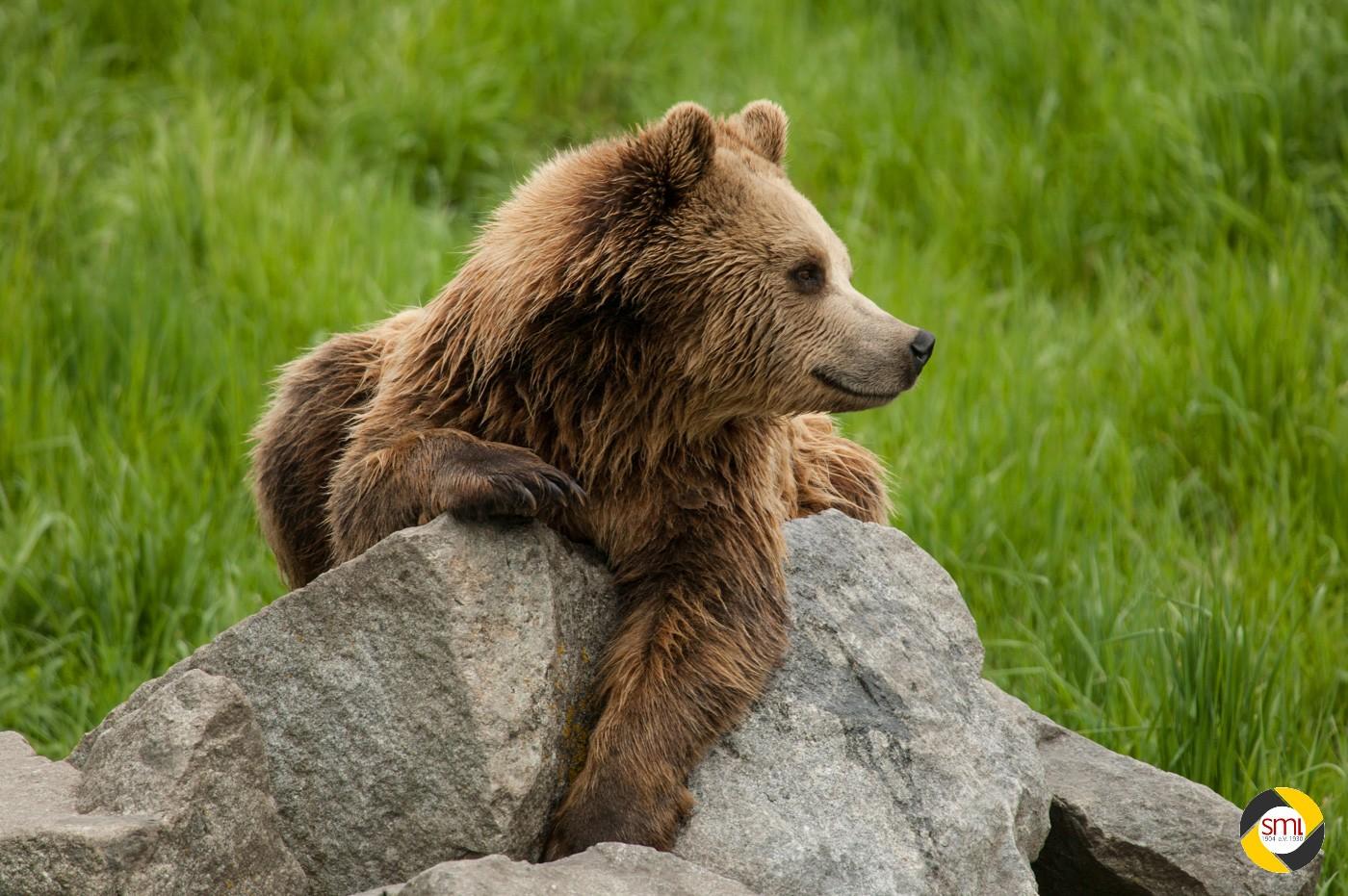 Bär © Christoph Stempfhuber