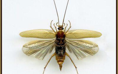 Klassische Insektenbilder von Richard Mayer